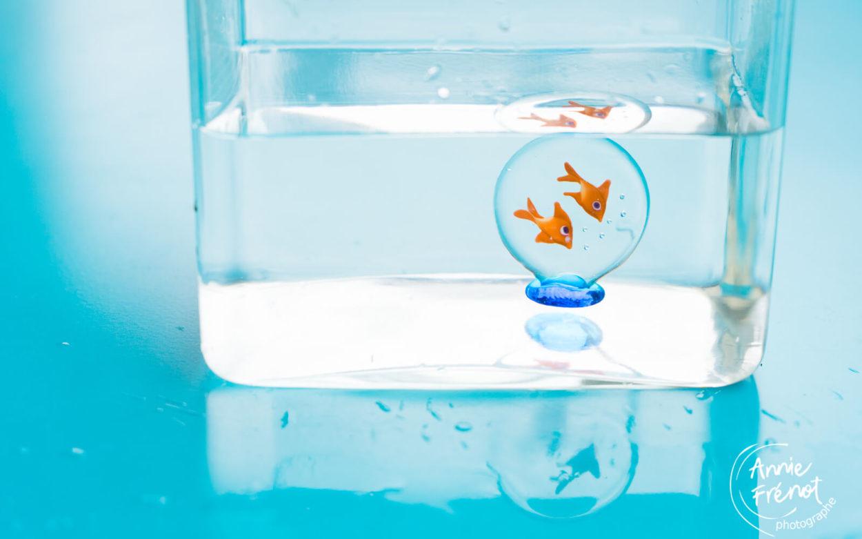 eau - poissons